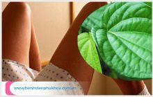 Hướng dẫn cách chữa viêm âm đạo bằng lá trầu không